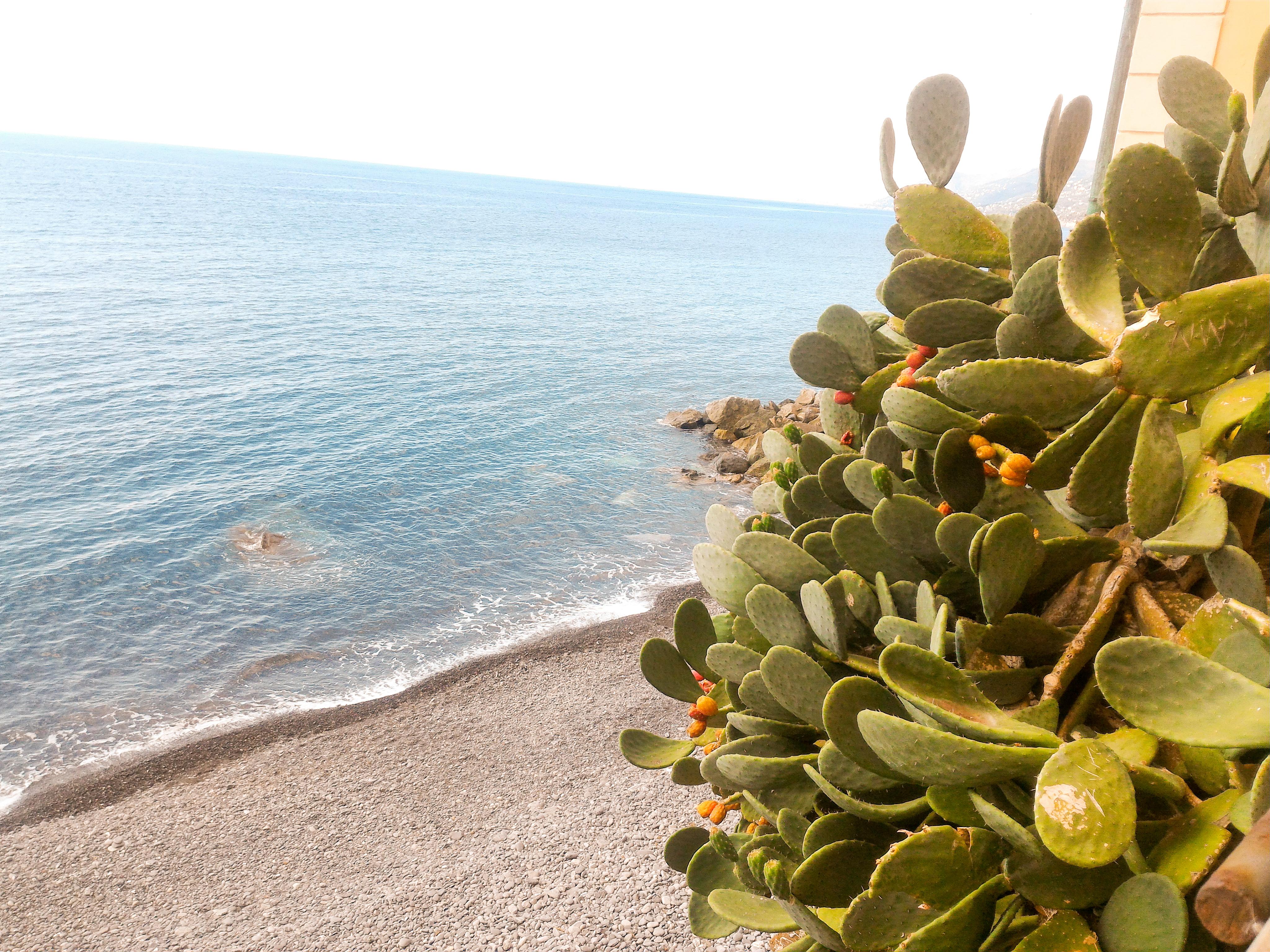 liguria tenger2