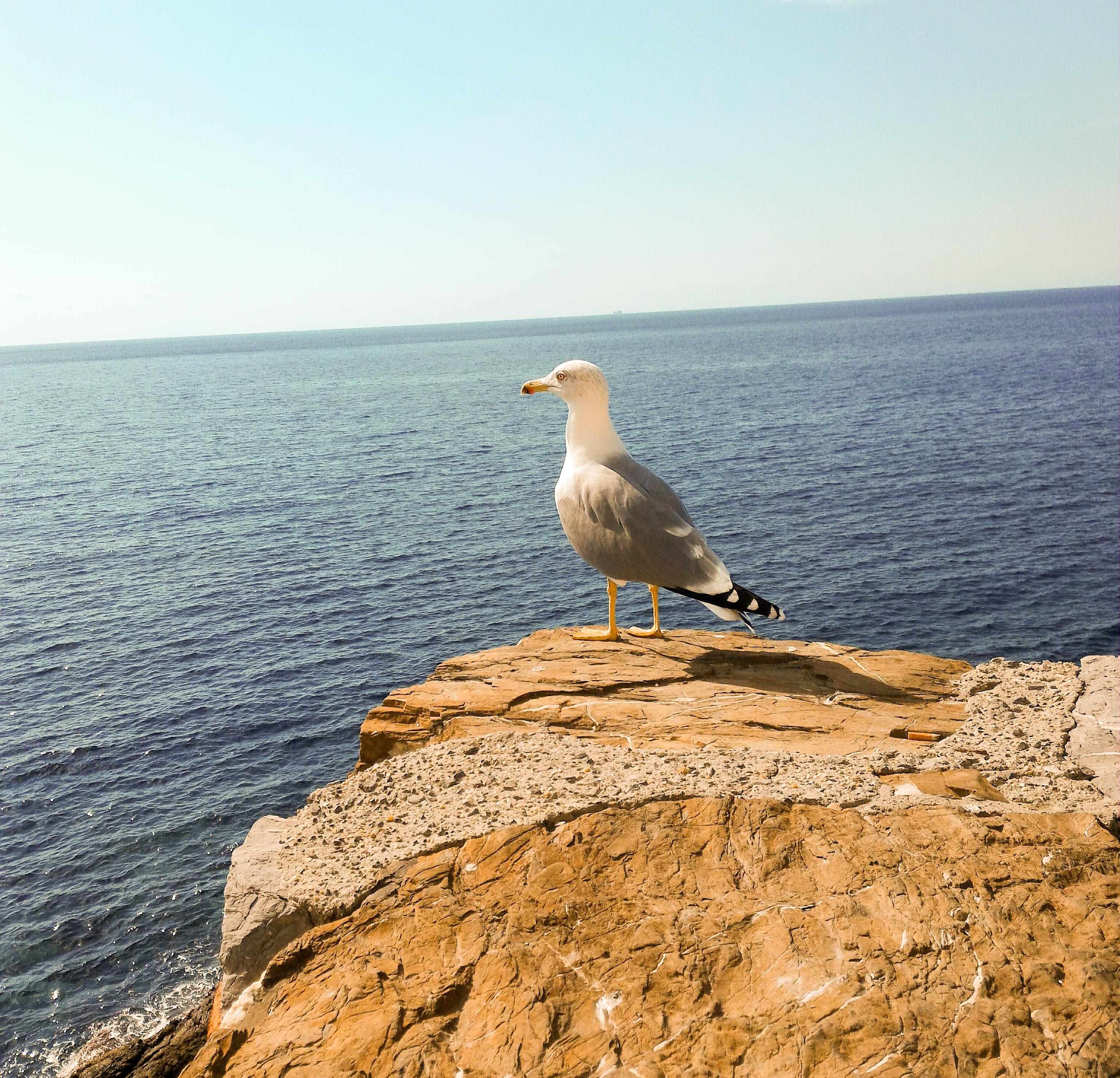 liguria tenger1