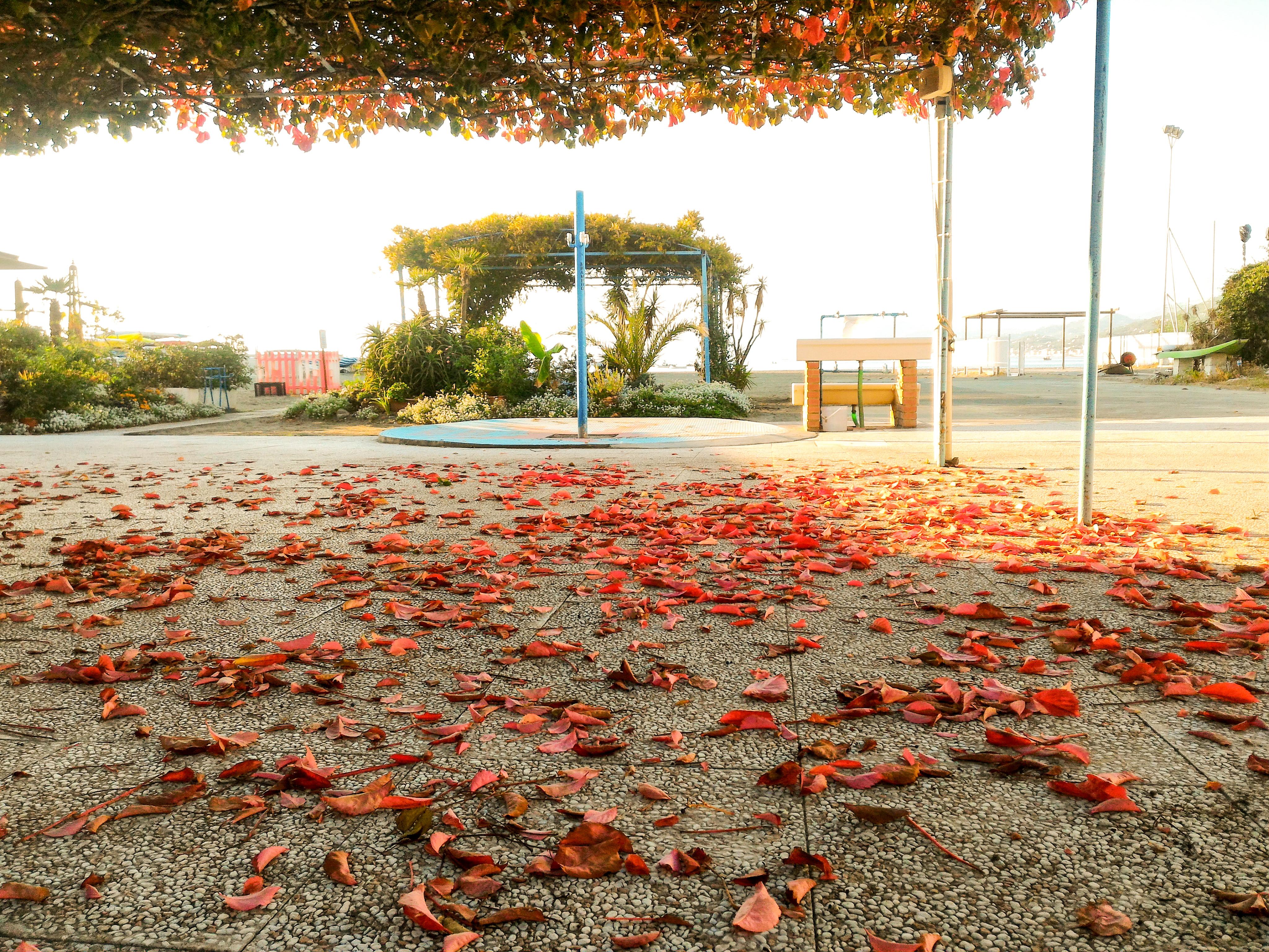 tenger ősszel