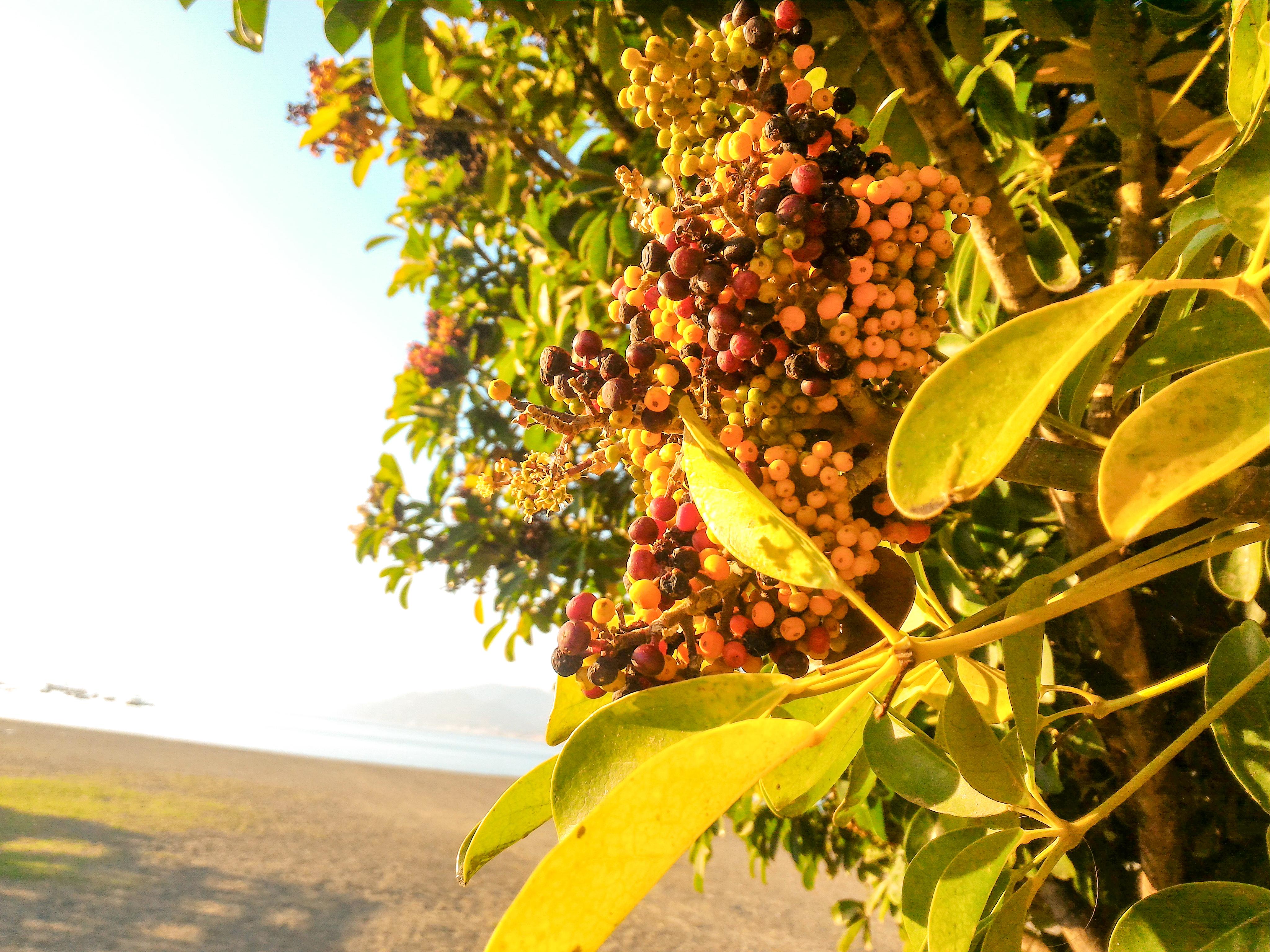 tenger ősszel liguria